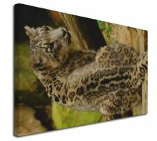 """Gorgeous Snow Leopard 30""""x20"""" Wall Art Canvas, Extra Large Picture , AT-53-C3020"""