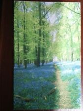 POSTCARD BUCKINGHAMSHIRE RINGSHALL - BLUEBELL WOOD NEARBY