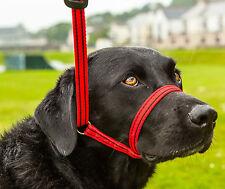 Où gencon tout en 1 head collar and lead empêcher les chiens tirant sur le plomb rouge/noir