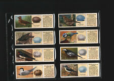 tea cards typhoo british birds & their eggs 1936 full set