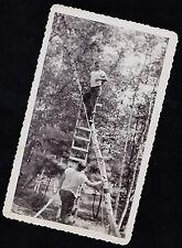 Old Vintage Antique Photograph Men In Woods Man on Ladder Up In Tree