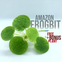 12+ Leaf Amazon Frogbit (+FREE BONUS PLANT) Live Floating Plant for Aquarium
