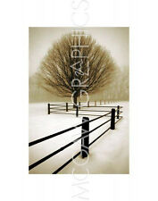 "WINSTON, DAVID LORENZ - FROSTED OAK & ROAD - ART PRINT POSTER 14"" X 11"" (1601)"
