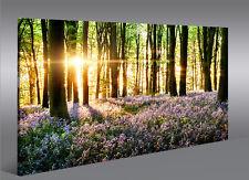 Bild auf Leinwand Lavendel im Wald 1K Leinwandbild Wandbild Poster