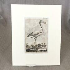 Rare Red Flamingo Antique Engraving Print Buffon Plates Natural History 1812