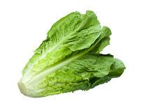 60 Graines de Laitue Romaine Non Traité seeds plantes salade légumes ancien