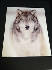 """Wolf W/ Snow On Nose Large 16 x 20"""" New Picture Print in Lithograph Dealer"""