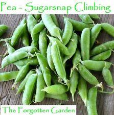 Pea Sugarsnap Climbing Seed 100 Seeds Heirloom Vegetable Garden Sugar Snap
