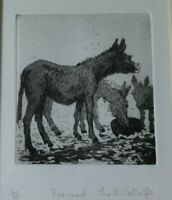 ORIGINAL ETCHING OF RESCUED DONKEYS, ANIMALS PRINT 1/25 BY JUNE N. METCALFE