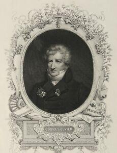 1842 Antique engraved portrait of GEORGES CUVIER, Naturalist, Zoologist. Print.