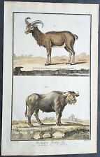 1753 Comte De Buffon Large Antique Mammal Print of Mountain Goat & Water Buffalo