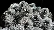 Silver Pine Cones Hand Painted All Natural Premium Quality Cones One Dozen