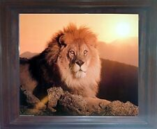 Lion King (Sunset) Big Cat Wild Animal Wall Decor Brown Framed Art Print Picture