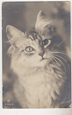 RPPC,Cat Postcard,Bright-Eyed,Long Haired Cat,Used,U.K.,1917