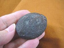 (F-309j) fossil Tortoise turtle leg spur specimen Florida rivers Pleistocene Age