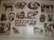 Photo article Kennel Club Dog Show Crystal Palace London 1932