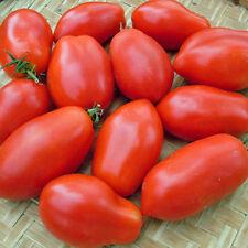 100 semillas-tomate-Napoli