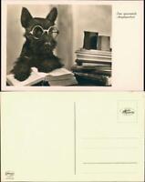 Ansichtskarte  Tiere - Hunde Hund Buch lesend Brille Fotokunst 1930