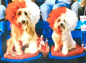 """""""Happy Anniversary to My Better Half!"""" AVANTI CARD Superfan Sports Dogs at Game"""