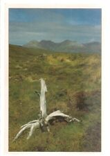 REMAINS OF THE ANCIENT DUNDONNELL FOREST, WESTER ROSS   unused vintage postcard