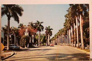 Florida FL Fort Myers Beach Edison Stately Royal Palms Postcard Old Vintage Card