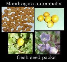 Mandragora autumnalis - autumn mandrake - FRESH viable seeds x20+ seed pack