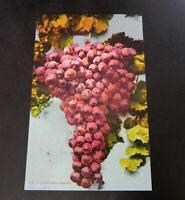 California Grapes Vintage 1910s Fruit Mitchell Postcard CA Wine San Francisco
