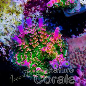 Jf Homewrecker sps , Aquaculture, WYSIWYG. Sps. Lps.  Zoanthids , corals