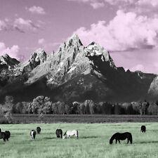 Yellowstone - Kone (2015, Vinyl NEU)