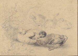 Robert Erbe, Enten, Bleistiftzeichnung, signiert, um 1890