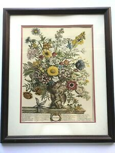 VINTAGE  NOVEMBER LITHOGRAPH FROM TWELVE MONTHS of FLOWERS by ROBERT FURBER
