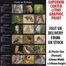 Owls in Britain Litho Art Print Poster A2 59cm x 42cm Birds of Prey Owl BLPA2P09