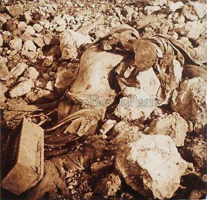 Cadavre Fleury Première Guerre mondiale 1914-18 WW1 Plaque Stereo Vintage