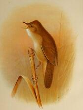 Art Prints 1909 British Warblers Print Female Chiff Chaff ~ GrÖnvold
