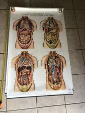 Nystrom Pull Down Anatomical Charts Lot Of 7