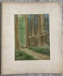 Vintage California Redwood Hand Colored Matted Photo Photograph Unsigned