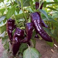 Sweet Marconi púrpura Pepper X 15 Semillas