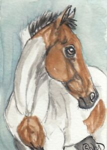 ACEO original Watercolor Art Card Horse Bay Tobiano Paint/Pinto weanling filly