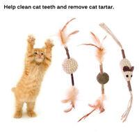 Matatabi Katzenminze Kauen Kätzchen Holz Sticks Molar Spielzeug Zahnpflege Natur