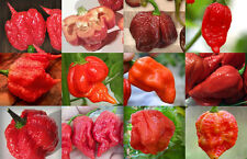 Rare World's  Official  Top Six Hottest  Chilli  seeds-25 seeds pack