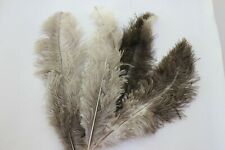 10 natural undyed silver floss soft ostrich feather first grade 35-40cm 14/16""