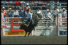 331081 Bull Riding A4 Photo Print