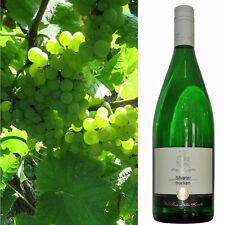 Silvaner trocken 2016 Weißwein vom Weingut Dieter Kuntz Pfalz 18 Literflaschen