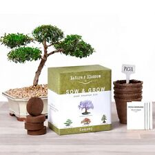 Grow 4 Bonsai Trees Starter Complete Kit Seeds NEW Germination Indoors Outdoors