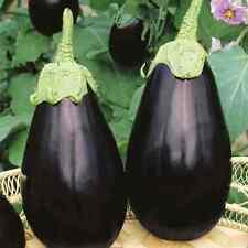 SEMI Melanzana-Bellezza nera 20 Finest semi