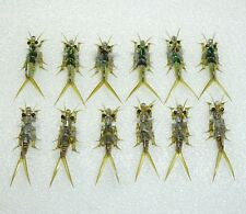 12 Artflies Realistic Olive Yellow Stonefly Nymph Assort, Special & Natural, #12