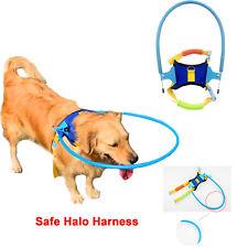 Animal de compagnie Aveugle Chien Sécurité Harnais Halo Empêcher la Collision