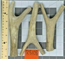 3 Medium Real Whole Not Split Mule Deer Antler Bone Dog Chews Toy Treats Lot