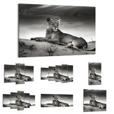 QUADRO MODERNO Stampa su tela Leone Deserto Animale 30 FORME IT 3165