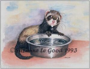Ferret Polecat art print from original painting signed by Suzanne Le Good
